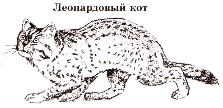 Доклад на тему тотемные животные 8368